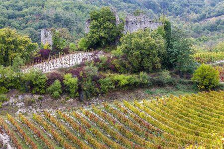 autumn vineyards in Rhona region, France
