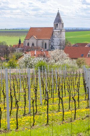 vineyards near Hnanice, Znojmo region, Czech Republic