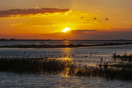National park Camargue, Provence, France