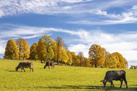 autumn landscape of Dachstein region, Austria Zdjęcie Seryjne