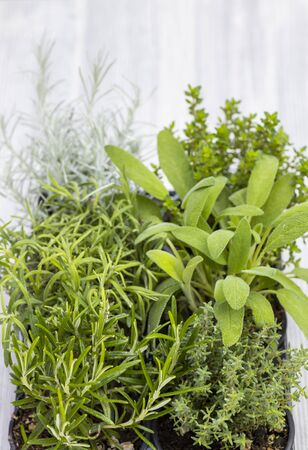 mix of herbs in a pot - rosemary, thyme, sage, Italian smil and marjoram
