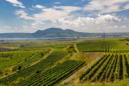 Vineyards near Nove Mlyny reservoir with Palava in Southern Moravia, Czech Republic Reklamní fotografie