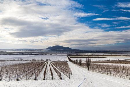 Winter vineyards under Palava near Sonberk, South Moravia, Czech Republic 写真素材