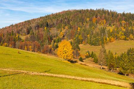 autumn landscape near saddle Beskyd in Slovakia