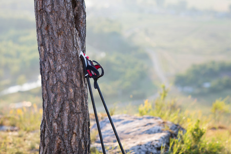 Nordic walking sticks leaning against a tree. concept: active lifestyle Standard-Bild