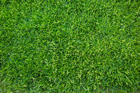 Green grass background texture. fresh bright juicy mowed lawn. top view, close up. 版權商用圖片