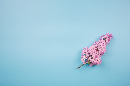 branch of lilac on a blue background.minimalism.