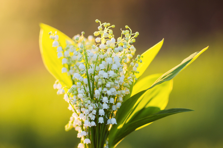 bouquet of lilies of the valley in the contrasting light of the setting sun. flowers at sunset.