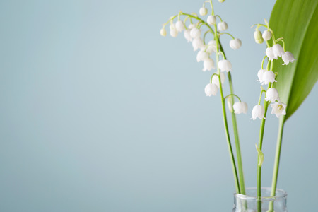 lilies of the valley in a vase on a blue background.