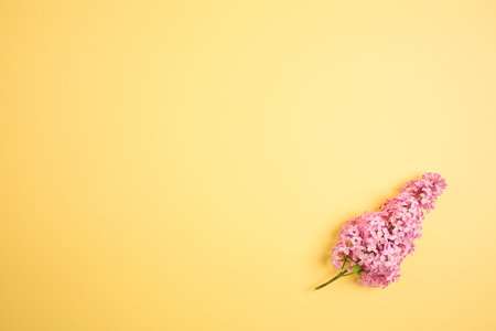 branch of lilac on a yellow background. minimalism.