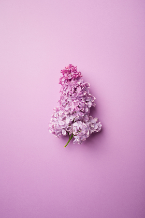 branch of lilac on a purple background. minimalism. 스톡 콘텐츠