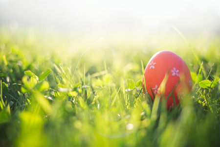 Easter eggs in spring grass in sun light. natural green background with selective focus. 스톡 콘텐츠