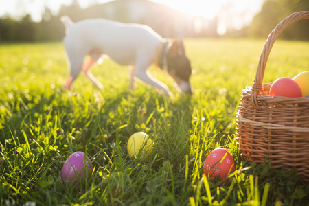 Easter eggs in a basket on the grass on a Sunny spring day close-up. running dog in the background.