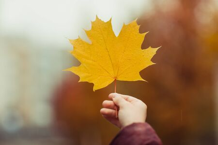Hand holding yellow maple leaf on autumn orange background Banco de Imagens