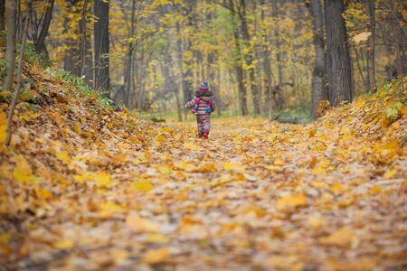 a small child goes on the road to the autumn golden park. baby walks outdoor Banco de Imagens