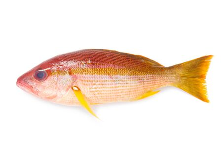 Whole Red Snapper Isolated On White Foto de archivo - 132671698