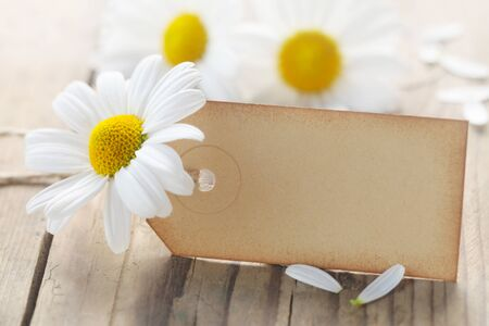 Blank Paper Label With White Marguerites On A Wooden Background Stock Photo