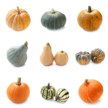 Collage Of Various Types Of Pumpkin Isolated On White