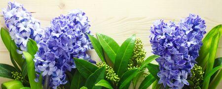 Blue hyacinths On A Wooden Background 版權商用圖片
