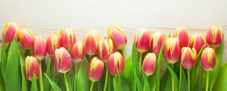 Red And Yellow Tulips On A Wooden Background