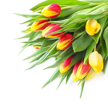 A Bunch Of Tulips Isolated On White