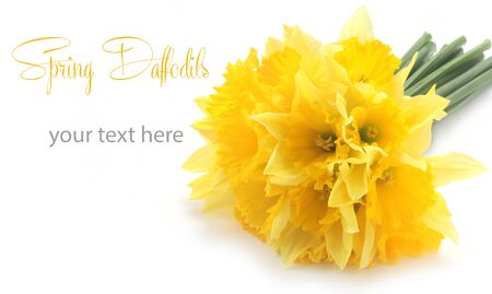 Daffodils With Copy Space Isolated On White