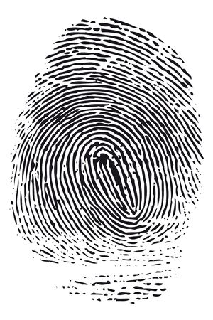 fingermark: Detailed black fingerprint isolated on white background.