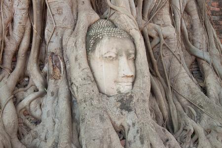 cabeza de buda: Ancient buddha head at ayutthaya thailand