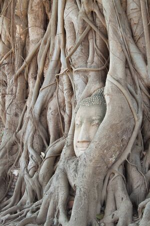 tabernacle: Ancient buddha head at ayutthaya thailand