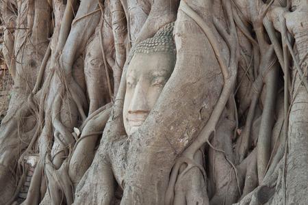 cabeza de buda: cabeza de Buda antiguo en Tailandia de Ayutthaya