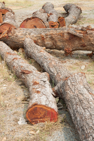 barrenness: Timber place on the ground