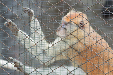 penitentiary: The monkey in the cage at the zoo Stock Photo