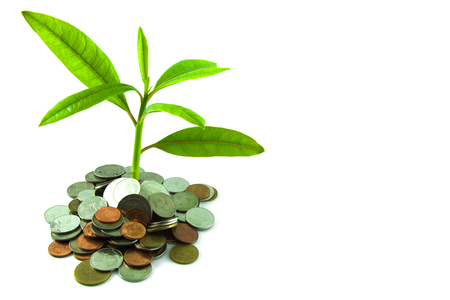 The silver coins with young plant on white background Stock Photo