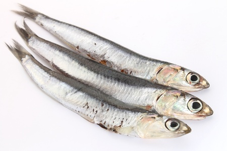 anchovy: fresh anchovies isolated on white Stock Photo