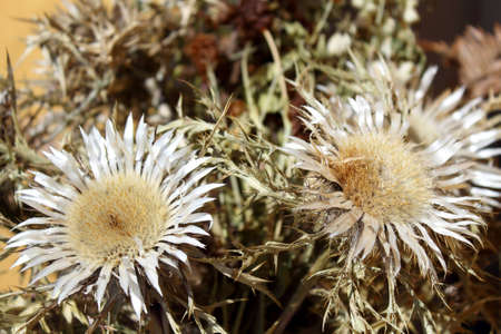 composition of dried teasels and mountain flowers