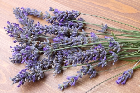lavender flowers: lavender flowers Stock Photo