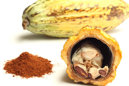 Cacao fruit and cocoa powder photo