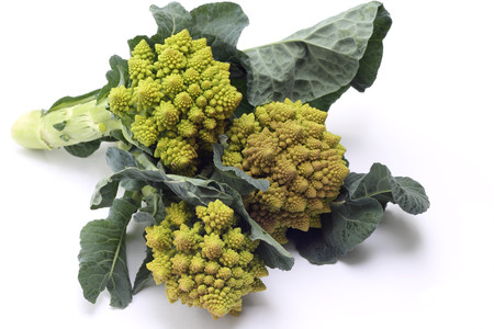 romanesco: Romanesco broccoli or Roman cauliflower on white