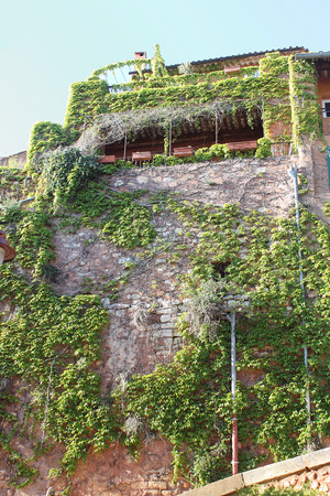 Roussillon, Provence, France- wall with ivy
