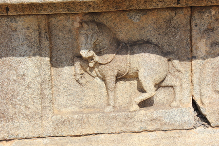 Hampi Vittala Temple wall carving of a decorated horse marching
