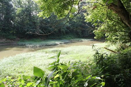 Brush Creek at Serpent Mound Stock Photo