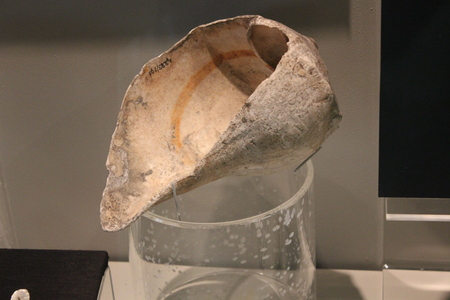 Marine Conch-Shell Dipper at Fort Ancient Museum display Editorial