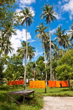 shantytown: Monk s clothing with coconut trees in Luang Prabang