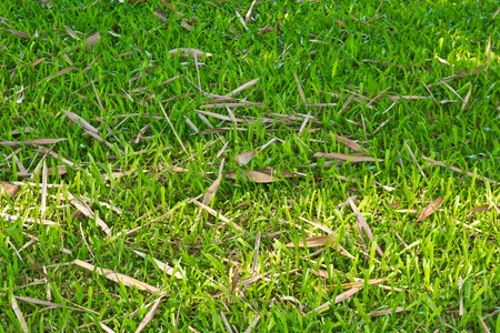 Green grass with bamboo leaf Stock Photo - 21140282