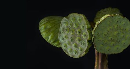 Fresh lotus seed heads isolated on the black background. Stock Photo