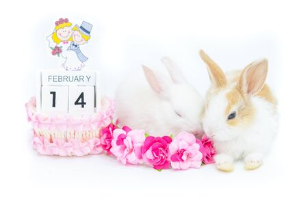 Two kitten rabbits sit near the painted wooden calendar reminding of the Valentine day with some artificial flowers for decoration isolated on white background.