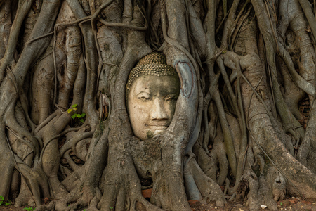 Buddha head embedded in a Bodhi tree, Ayutthaya, Thailand