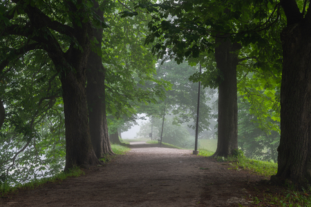 Walking path with diverse selection of trees on both sides with the morning mist in Toompark, Tallinn, Estonia