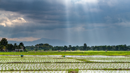 Rice planting season in Chiang Mai, Thailand with the sunlight shine through the rainy cloud