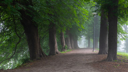 Walking path with diverse selection of trees in between fill with morning mist in Toompark, Tallinn, Estonia
